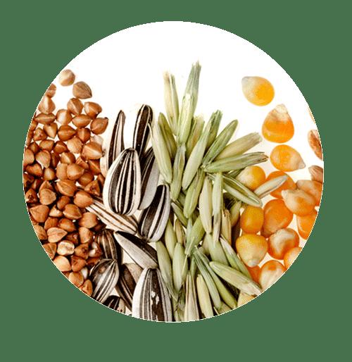 ikhrah.com - Cereals (Bijirin)